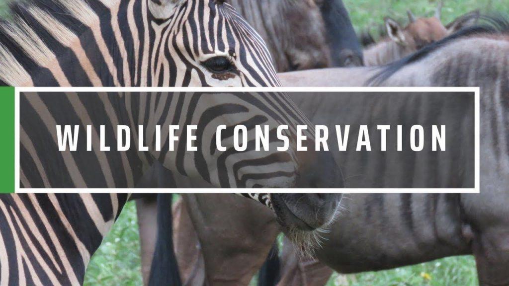 Big Data In WildLife Conservation